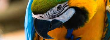 Parrot Ara Ararauna Cover Photo