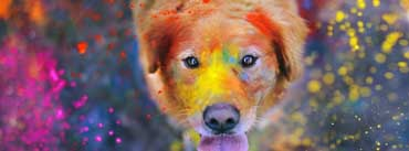 Colorful Dog Painting Cover Photo