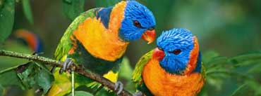 Parrot Love Branch Cover Photo
