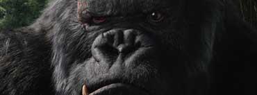 King Kong Cover Photo