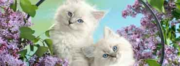 Beautiful Kittens Cover Photo