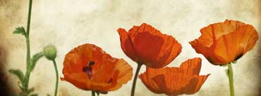 Poppies Flowers Vinatge Cover Photo