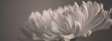 Vintage White Flower Cover Photo