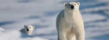 Polar Bear And Baby Cover Photo