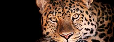 Magnificent Leopard Cover Photo