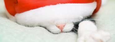 Santa Cat Cover Photo