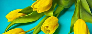 Beautiful Yellow Tulips Cover Photo