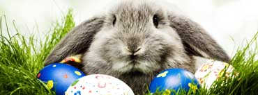 Easter Bunny Cover Photo