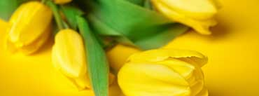 Easter Flowers Cover Photo