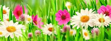 Colorful Easter Flowers Cover Photo