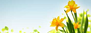 Happy Easter Yellow Flower Cover Photo