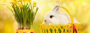Happy Easter Bunny Cover Photo