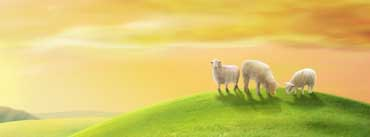 Sheeps Spring Hill Cover Photo