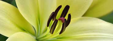 White Lily Macro Cover Photo