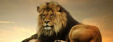Big Lion On Rock Cover Photo