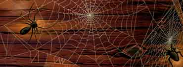 Spider Webs Cover Photo