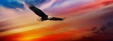 Happy 4th Of July Screamming Eagle Cover Photo