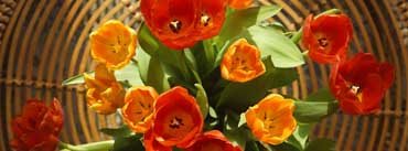 Tulips For Mothers Day Cover Photo