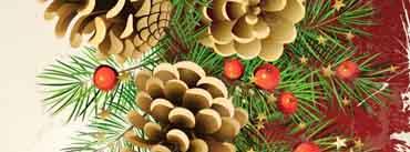 Pine Cones Cover Photo