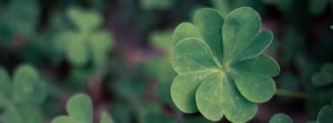 Lucky Clover Cover Photo