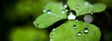 Rain Drop Clover Cover Photo