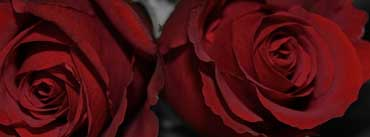 Dark Red Roses Cover Photo