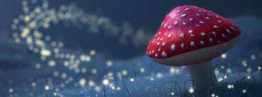Fireflies Red Mushroom Cover Photo