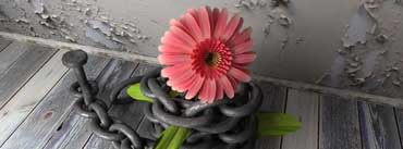 Flower With Chain Cover Photo