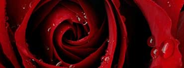 Red Rose Cover Photo