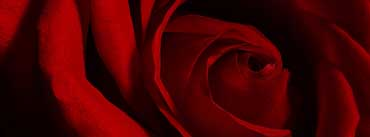 Valentines Day Rose Cover Photo
