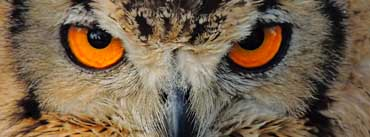 Indian Owl Face Cover Photo