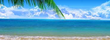 Palm Branch Ocean Cover Photo