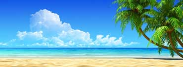Palm Trees Blue Sky Cover Photo