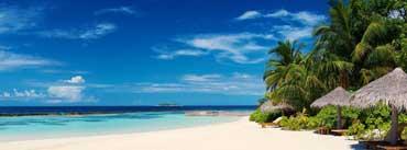 Palm Trees On Ocean Coast Cover Photo