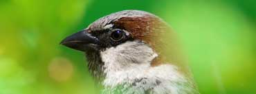 House Sparrow Cover Photo