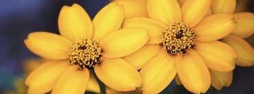 Beautiful Yellow Flowers Cover Photo