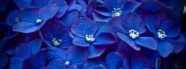 Blue Flowers Cover Photo
