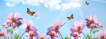 Butterflies And Cosmos Flowers Cover Photo