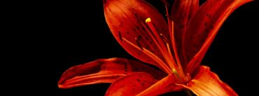 Red Flower Cover Photo
