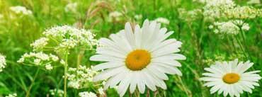 Summer Flower Field Cover Photo