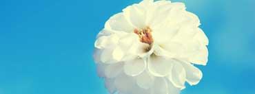White Flower Cover Photo