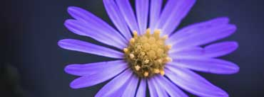 Wildflower Cover Photo