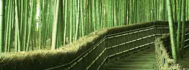 Bamboo Forest Path Way Cover Photo