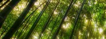 Bamboo Forest Cover Photo