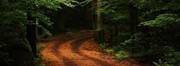 Beautiful Forest Path Cover Photo