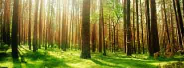Beautiful Forest Scenery Cover Photo