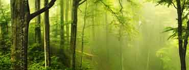 Beautiful Green Forest Cover Photo