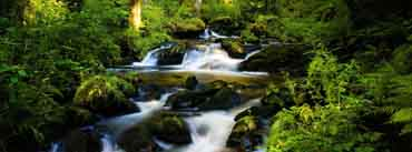 Stream Forest Cover Photo