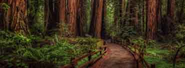Cathedral Grove Rainforest Cover Photo