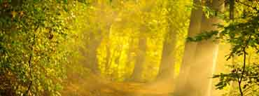 Enchanted Forest Cover Photo